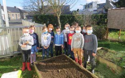 Plantations de bulbes dans le jardin de l'école