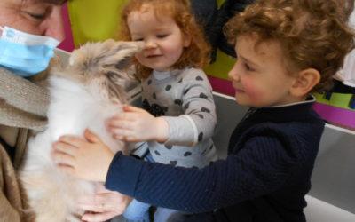 Visite d'un lapin angora chez les maternelles