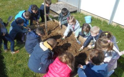 Plantation de radis en maternelle