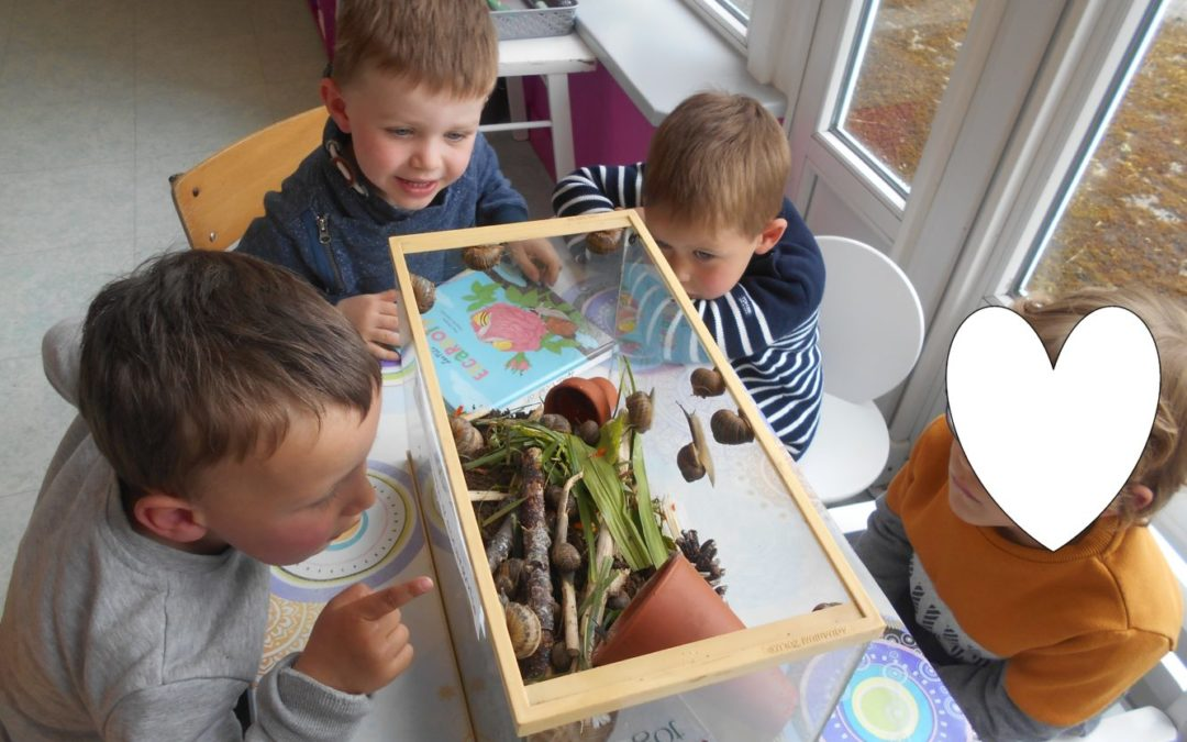 Des escargots en maternelle